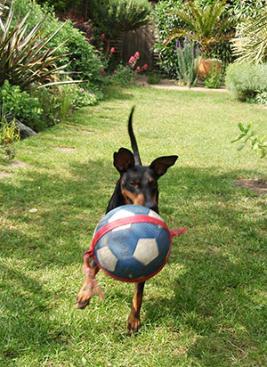 Dog training with a ball