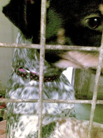 Rescue dogs in a cage